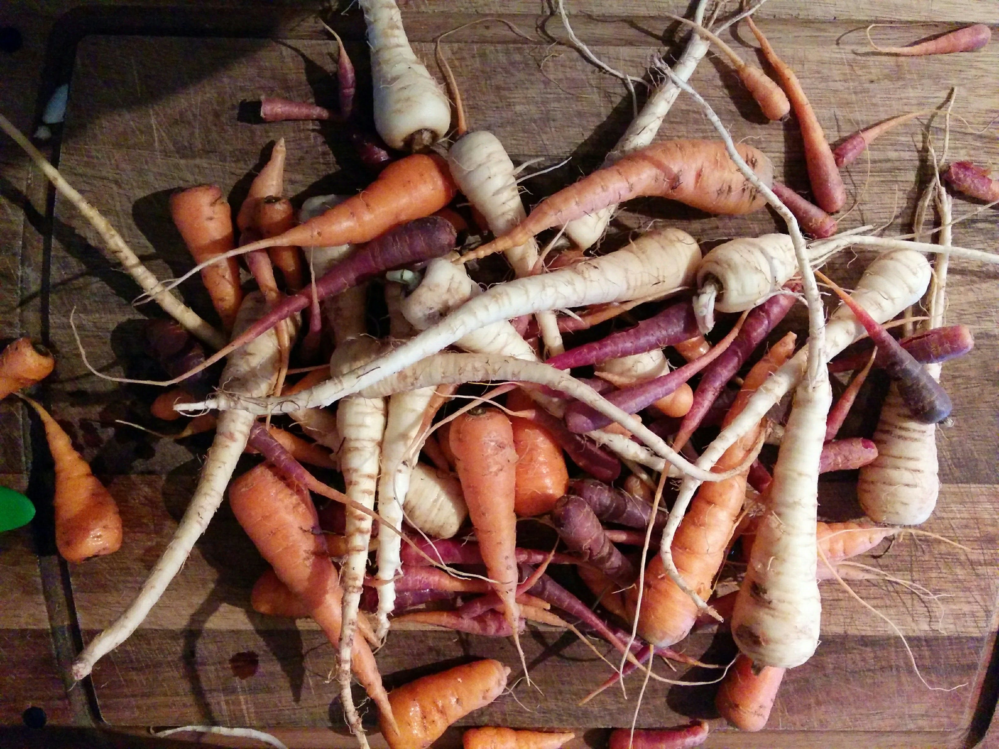 Carrots, Purple Carrots and Parsnips from our Garden